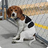Adopt A Pet :: Oh My Darling, Clementine - Cincinnati, OH