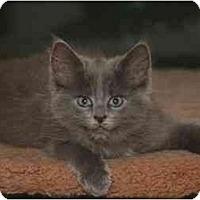 Adopt A Pet :: Apollo - Cincinnati, OH