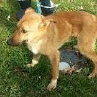 German Shepherd Dog Mix Dog for adoption in Prestonsburg, Kentucky - ethel