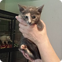 Adopt A Pet :: Waynette - Lawrenceville, GA