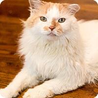 Adopt A Pet :: Don Juan - Chicago, IL