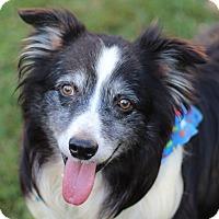 Adopt A Pet :: Vader - Romeoville, IL