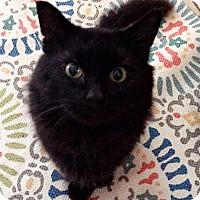 Adopt A Pet :: Grayson - Delmont, PA
