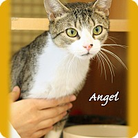 Adopt A Pet :: Angel - Waterbury, CT