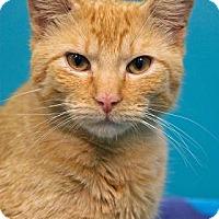 Adopt A Pet :: Mercury - New Orleans, LA