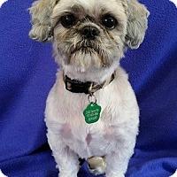 Adopt A Pet :: Toby Turner - Urbana, OH