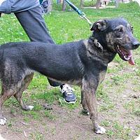 Adopt A Pet :: Tari - Toronto, ON