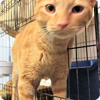 Adopt A Pet :: Rhett - Reeds Spring, MO