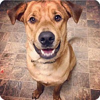 Adopt A Pet :: Toby - Charlotte, NC
