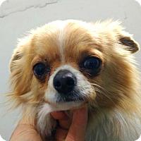 Adopt A Pet :: Astro - Fairfax, VA