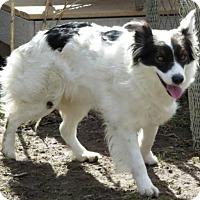 Adopt A Pet :: Ginger - Alturas, CA