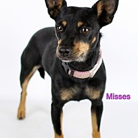 Adopt A Pet :: Misses - Bloomington, MN