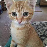 Adopt A Pet :: Sassy - Monroe, GA