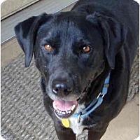 Adopt A Pet :: Beaux - Houston, TX