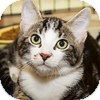 Adopt A Pet :: Simba - Irvine, CA