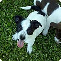 Adopt A Pet :: Panda - Bakersfield, CA