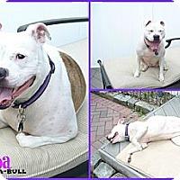 Adopt A Pet :: Sheba - WARREN, OH