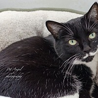 Adopt A Pet :: Rhoda - Santa Fe, NM