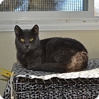 Adopt A Pet :: Grayson - Kelso/Longview, WA
