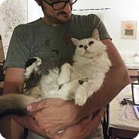 Adopt A Pet :: Monroe - Los Angeles, CA