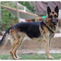 Adopt A Pet :: LENNY - Glendale, CA