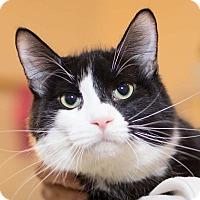 Adopt A Pet :: Mint - Brooklyn, NY