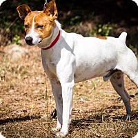 Adopt A Pet :: Monty - Southern Pines, NC