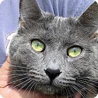 Adopt A Pet :: Serge - Germantown, MD