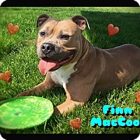 Adopt A Pet :: Finn MacCool - Hartford City, IN