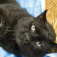 Adopt A Pet :: Homie - Addison, IL