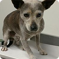 Adopt A Pet :: Duggy - Auburn, WA