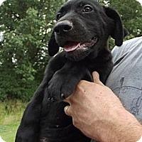 Adopt A Pet :: Rollo - AKA Porky - Danbury, CT