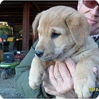 Adopt A Pet :: Daizy - Glastonbury, CT