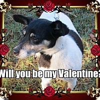 Adopt A Pet :: Jackie - McLoud, OK