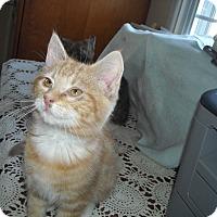 Adopt A Pet :: Matthew - Riverside, RI