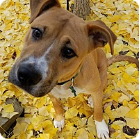 Adopt A Pet :: Clooney - Alpharetta, GA