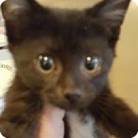 Adopt A Pet :: Amber - McHenry, IL