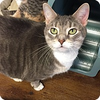 Adopt A Pet :: Linksy - Greensburg, PA