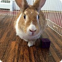 Adopt A Pet :: Alex - Pine Bush, NY