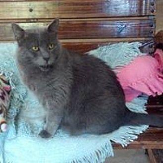 Domestic Shorthair Cat for adoption in Calimesa, California - Berkley