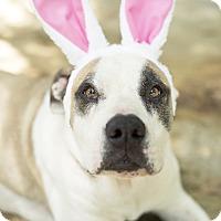 Adopt A Pet :: Dagz - Key Biscayne, FL