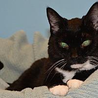 Adopt A Pet :: Fay - Cincinnati, OH