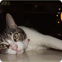 Adopt A Pet :: Lucy - Converse, TX