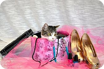 Calico Cat for adoption in Del Rio, Texas - Willow