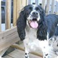 Adopt A Pet :: Suzie - Camden, SC