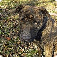 Adopt A Pet :: Baby - Princeton, KY
