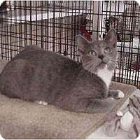 Adopt A Pet :: Sassie - Deerfield Beach, FL