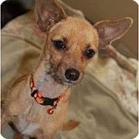 Adopt A Pet :: Leroy - Seattle, WA