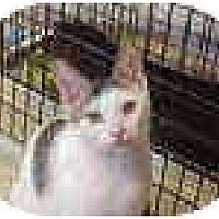 Adopt A Pet :: Micah & Jelly Bean - Deerfield Beach, FL