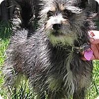 Adopt A Pet :: SOPHIA - Mission Viejo, CA